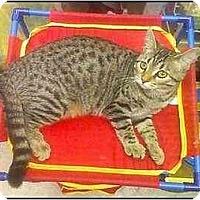 Adopt A Pet :: Skeets - Greenville, SC