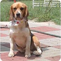 Adopt A Pet :: Bullet - Pembroke Pines, FL
