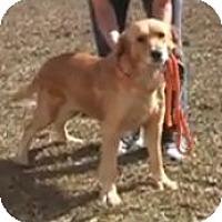 Adopt A Pet :: Olivia - Cheshire, CT