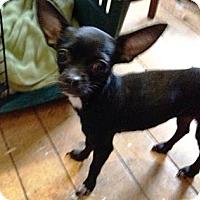 Adopt A Pet :: Gretel - Richmond, VA