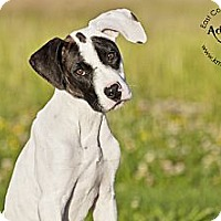 Adopt A Pet :: Colbie - Virginia Beach, VA
