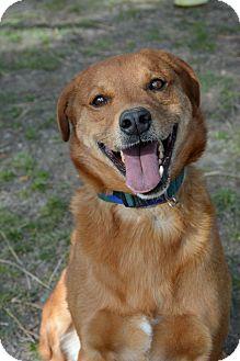 German Shepherd Dog Mix Dog for adoption in Mountain Center, California - Neiko