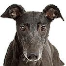 Adopt A Pet :: Legit