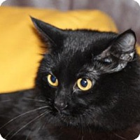 Adopt A Pet :: Frida - Vancouver, BC