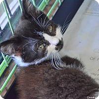 Adopt A Pet :: Kyle - Island Park, NY