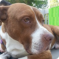 Adopt A Pet :: Milton ~ Adoption Pending - Youngstown, OH