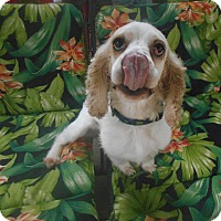 Adopt A Pet :: Smoke -Adopted! - Kannapolis, NC
