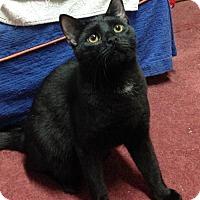 Adopt A Pet :: Brandy - Furlong, PA