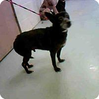 Adopt A Pet :: TANK - Conroe, TX