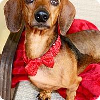 Adopt A Pet :: Roy - Weston, FL