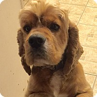 Adopt A Pet :: ALVIN - Santa Barbara, CA