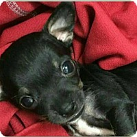 Adopt A Pet :: RONAN - Fort Worth, TX