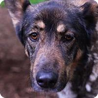 Adopt A Pet :: Luna - Bellevue, WA