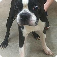 Adopt A Pet :: Elliott - Nashville, TN