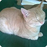 Adopt A Pet :: Nigel - Richmond, VA