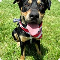 Adopt A Pet :: DIXON - New Cumberland, WV