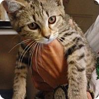 Adopt A Pet :: Kaia - Franklin, NH