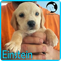 Adopt A Pet :: Einstein - Pittsburgh, PA