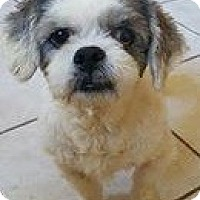 Adopt A Pet :: Gracie - Renton, WA