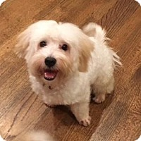 Adopt A Pet :: Buddy - Atlanta, GA