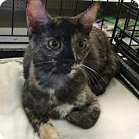 Adopt A Pet :: Vera - Gilbert, AZ