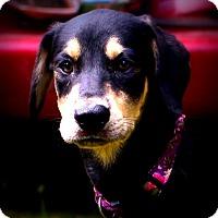 Adopt A Pet :: Bindi Mindi - Glastonbury, CT