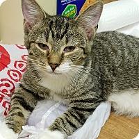 Adopt A Pet :: Marion - Trevose, PA