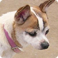 """Adopt A Pet :: Isabella (""""Isa) - Poway, CA"""