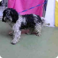 Adopt A Pet :: URGENT 1/19 @ DEVORE - San Bernardino, CA