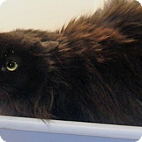 Adopt A Pet :: Ms Piggy - Wildomar, CA
