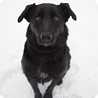 Adopt A Pet :: Rook - Drumbo, ON