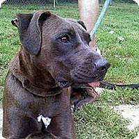 Adopt A Pet :: Tango - Albany, NY