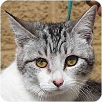 Adopt A Pet :: Smarty - Gilbert, AZ