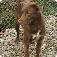 Adopt A Pet :: Chloe - Toronto/Etobicoke/GTA, ON