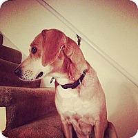 Adopt A Pet :: LYDIA - Hancock, MI