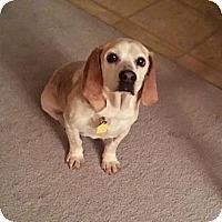 Adopt A Pet :: Rocky - Novi, MI