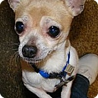 Adopt A Pet :: Caci - South Amboy, NJ