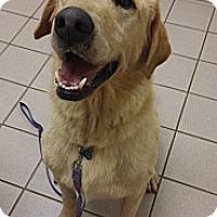 Adopt A Pet :: Gunner - Chattanooga, TN
