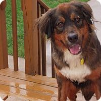 Adopt A Pet :: Tank - Rochester/Buffalo, NY