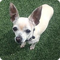 Adopt A Pet :: Eddie - San Jose, CA