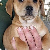 Adopt A Pet :: Moss - Gainesville, FL