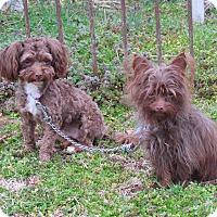 Adopt A Pet :: HAIKU & RUFF - Bedminster, NJ