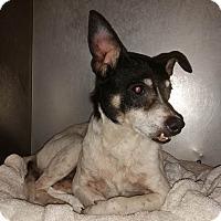 Adopt A Pet :: Aquarius - Lewisburg, TN