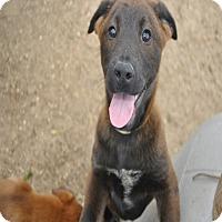 Adopt A Pet :: Macy meet me 5/13 - Manchester, CT