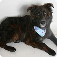 Adopt A Pet :: Rocco - Redding, CA
