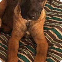 Adopt A Pet :: Damerae - Joliet, IL