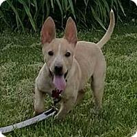 Adopt A Pet :: Mr. Jones - Elyria, OH