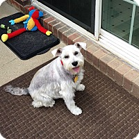 Adopt A Pet :: Gracie Girl/adopt. pending - Sharonville, OH