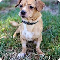 Adopt A Pet :: Stan - San Diego, CA