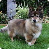 Adopt A Pet :: CYRUS - Newport Beach, CA